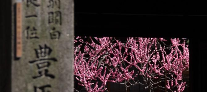 通りを歩く 木屋町通を二条から五条まで*碁盤の目になってる京都