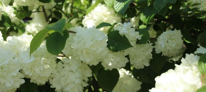 花を身近に楽しむ暮らし*花が導いてくれるご縁や素敵な時間
