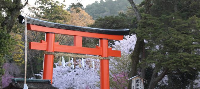 2017年4月13日朝現在 めっちゃコアな京都桜情報*上賀茂神社・半木の道