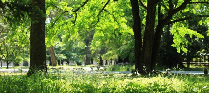 五感がどんどんひらいてゆく 京都御所で気持ちいい呼吸*呼吸から始める ただ感じてみるだけの時間