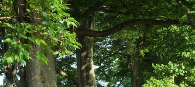 今、不安や恐怖で落ち着かないひとに*京都で大きな木に触れて深呼吸をしましょう
