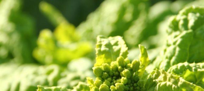 春には自分からどんな芽が出るかな*種を育てる呼吸