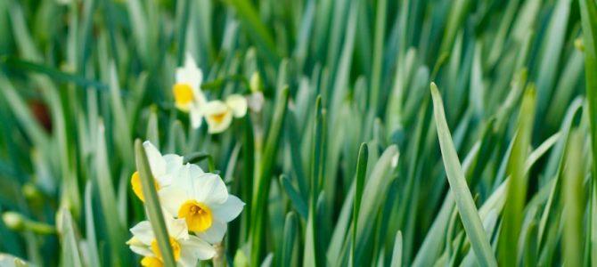 イメージのチカラでわたしをひらく*まずは「ひらく」春を迎える呼吸