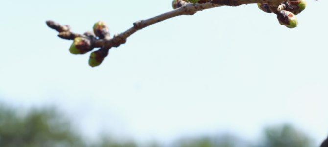 春分-何をするにも最初に深い呼吸をすると、変わってくるよ*春の氣のバランスを取る呼吸