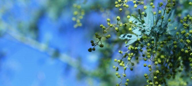 頭を休めてぼーっとする時間がエネルギーになる*啓蟄ー春の光をからだに通す呼吸